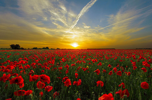 Remembrance Day is celebrated in Australia on November 11