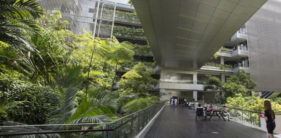 Biophilic Design in Khoo Teck Puat Hospital